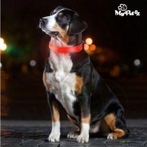 LED светеща каишка за куче My Pet EZ